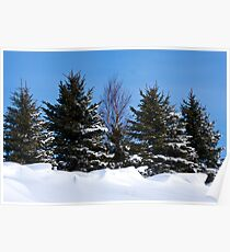 Pine Trees and Snow Caps Poster