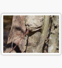 Barbwire Lizard Sticker