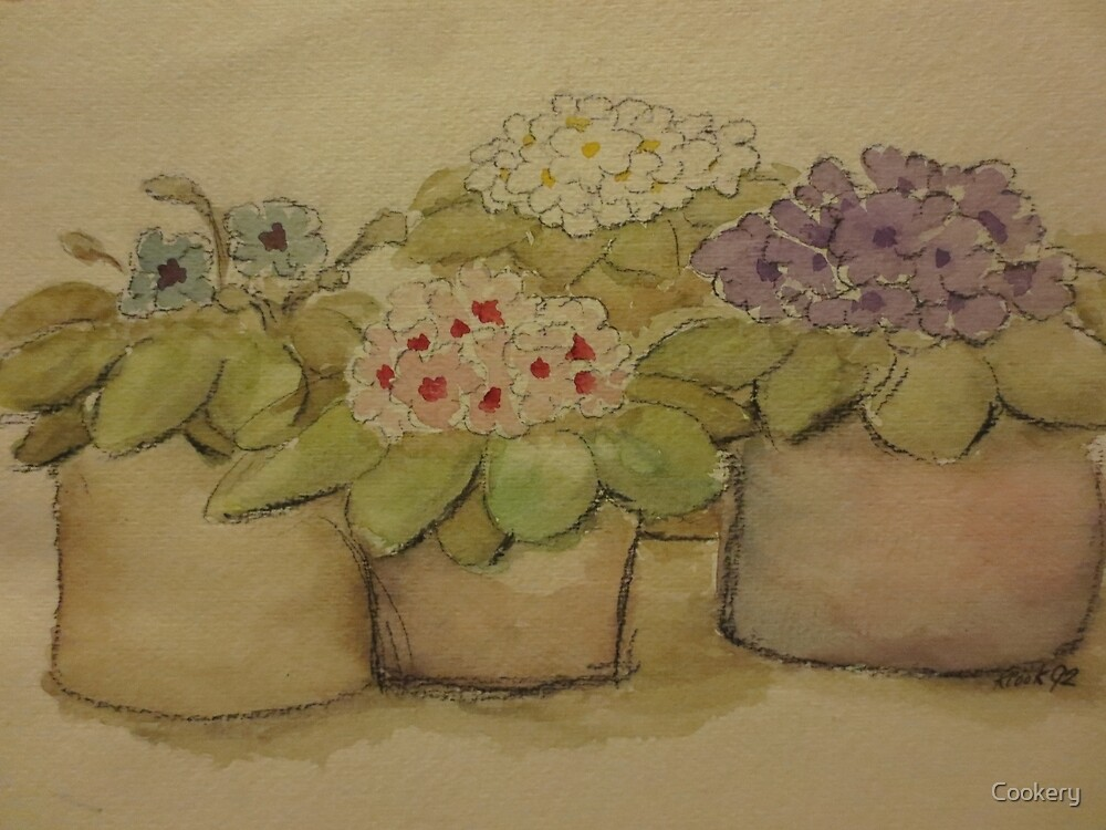 Four African Violets by Cookery