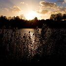 Sunset and lake by Mathieu Longvert