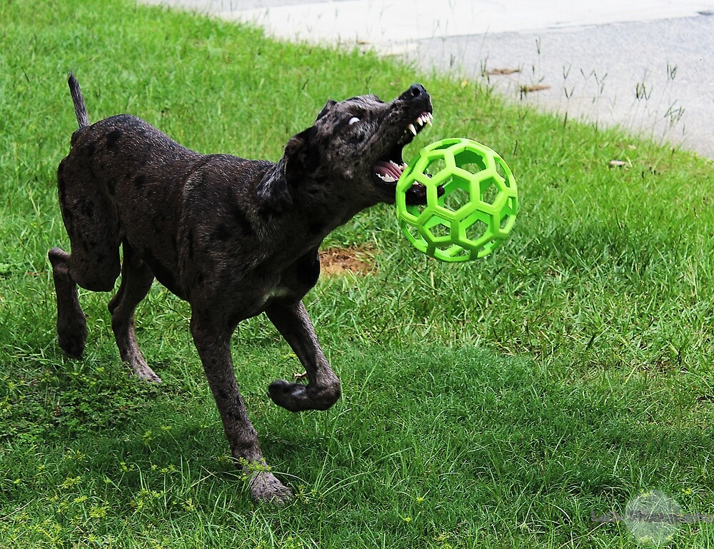 Teeth and Ball by LaCiv
