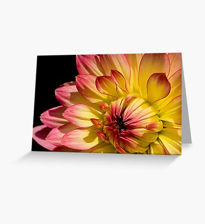 Rose Tipped Greeting Card