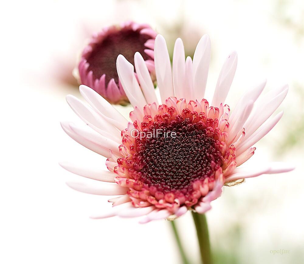 Chrysanthemum by OpalFire