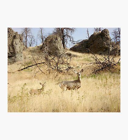 Freeze, Bambi! Photographic Print