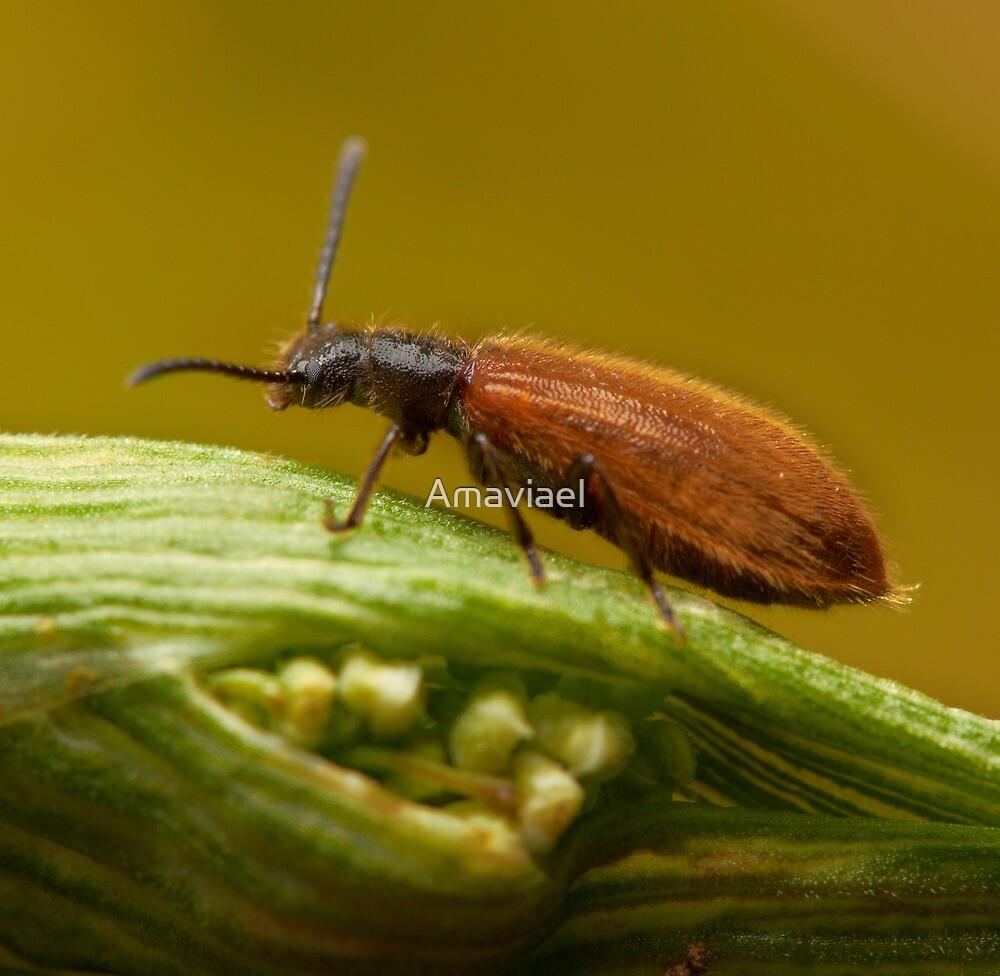 Beautifull small bug by Amaviael