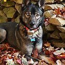 Dogs- Niki by Diana Nault