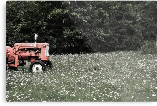 Tractor  by Erin Bailey