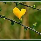 HEART IN THE FOREST by RoseMarie747