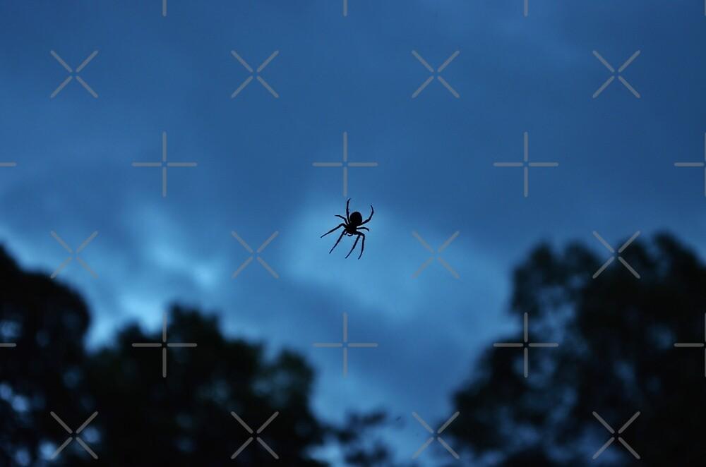 The Itsy Bitsy Spider by Scott Mitchell