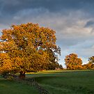 Three Trees lit by Autumn fire. by brimo