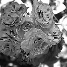 Roses in Infrared 3 by Andrew Brockinton