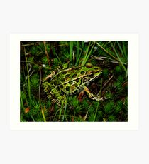 Northern Leopard Frog Among Mossy Ground Art Print