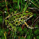 Northern Leopard Frog Among Mossy Ground by Robert Miesner
