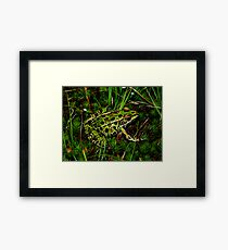 Northern Leopard Frog Among Mossy Ground Framed Print