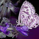 Purple take on a Skipper Butterfly by Richard Majlinder