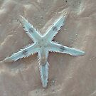 Starfish by Liz Worth