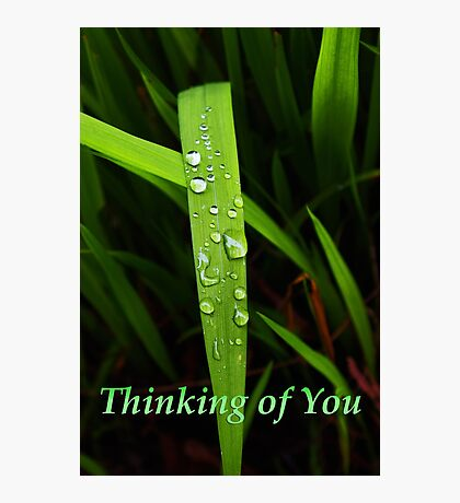 """grass blade """"thinking of you"""" card Photographic Print"""