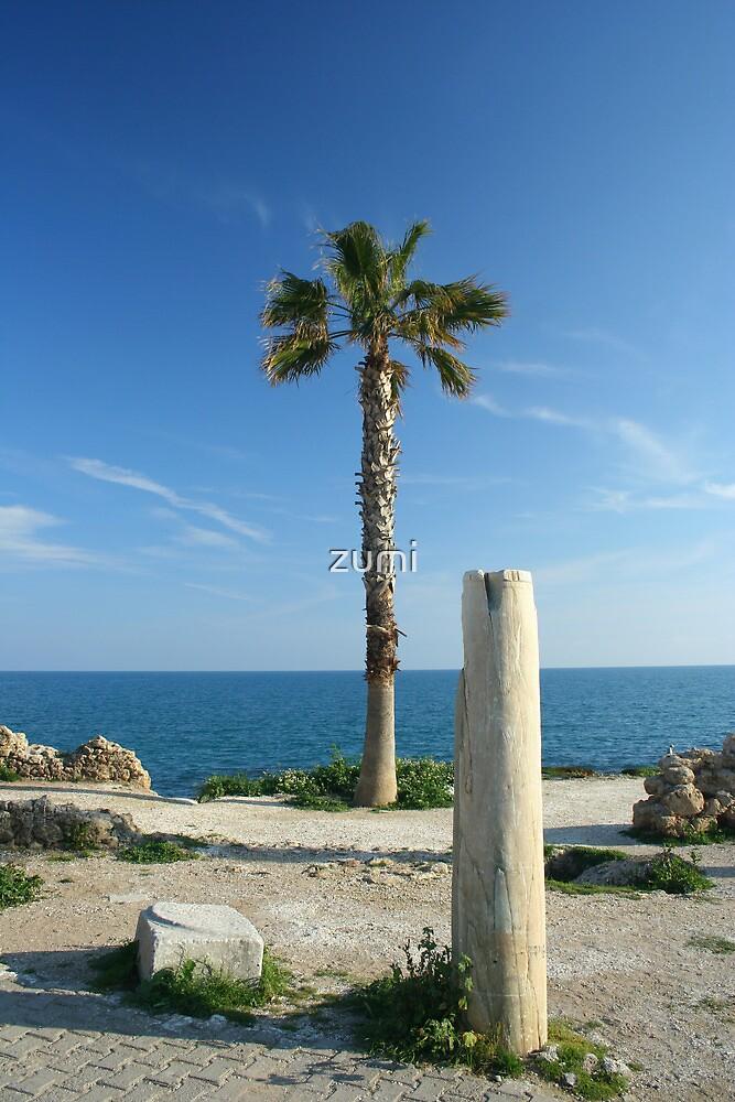 Palm tree by zumi