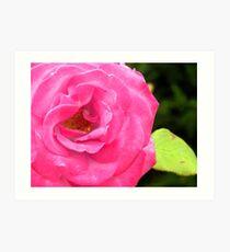 Alki Rose Art Print