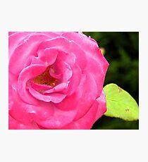 Alki Rose Photographic Print