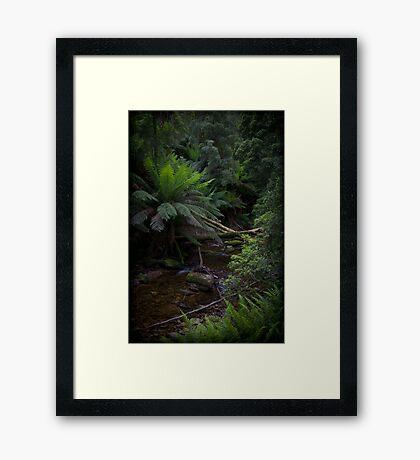 Rainforrest stream Framed Art Print