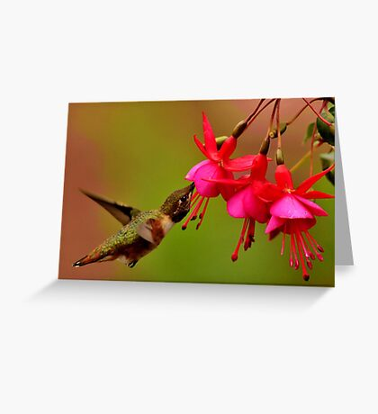 HUMMER IN SUMMER Greeting Card
