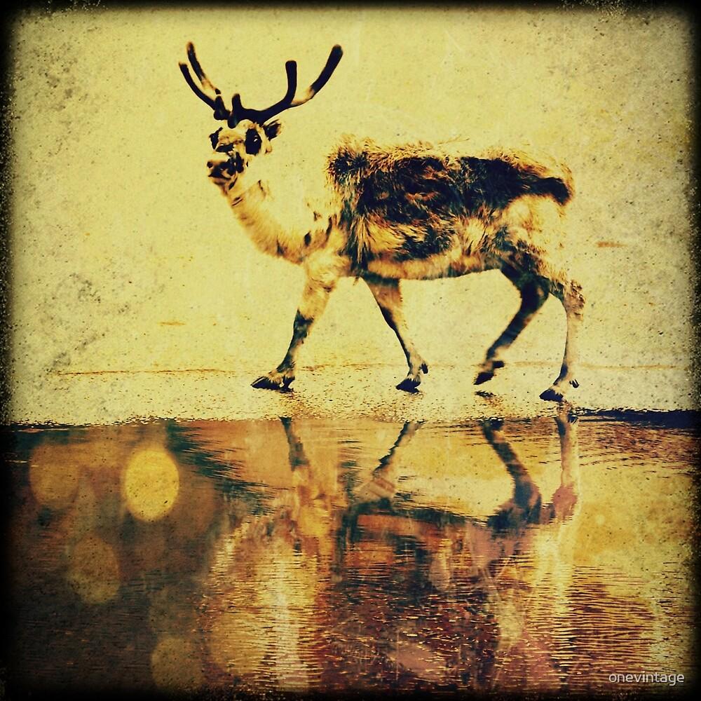 Reindeer wandering by onevintage