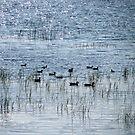 Quack by Akash Puthraya