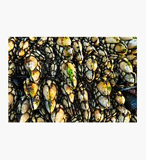 Leaf Barnacles Photographic Print