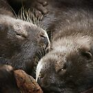 Sleeping Otters by Lance Leopold