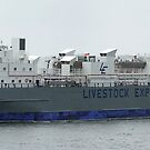 Bison Express  -  Livestock Carrier by Cecily McCarthy