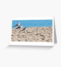 Three Amigos.. Greeting Card