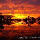 Victorian Floods: Mystic Forest by caroline ellis