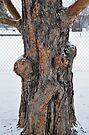Old Man Tree by MaryLynn