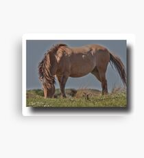 Horse in HDR Canvas Print