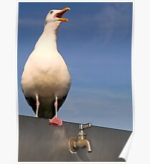 SeaGull on Tap...A Good Story With a Sad Ending Poster