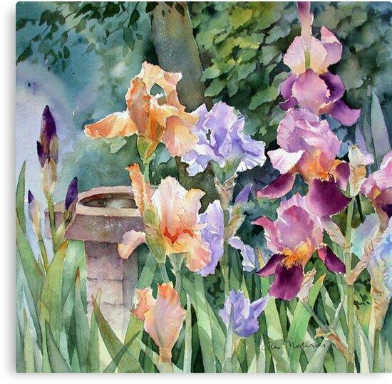 Bird bath and Irises by Ann Mortimer