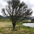 Tree by sl02ggp