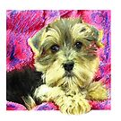 morkie puppy by jashumbert