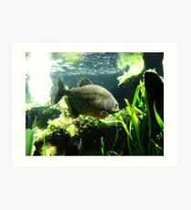 Piranha! Art Print