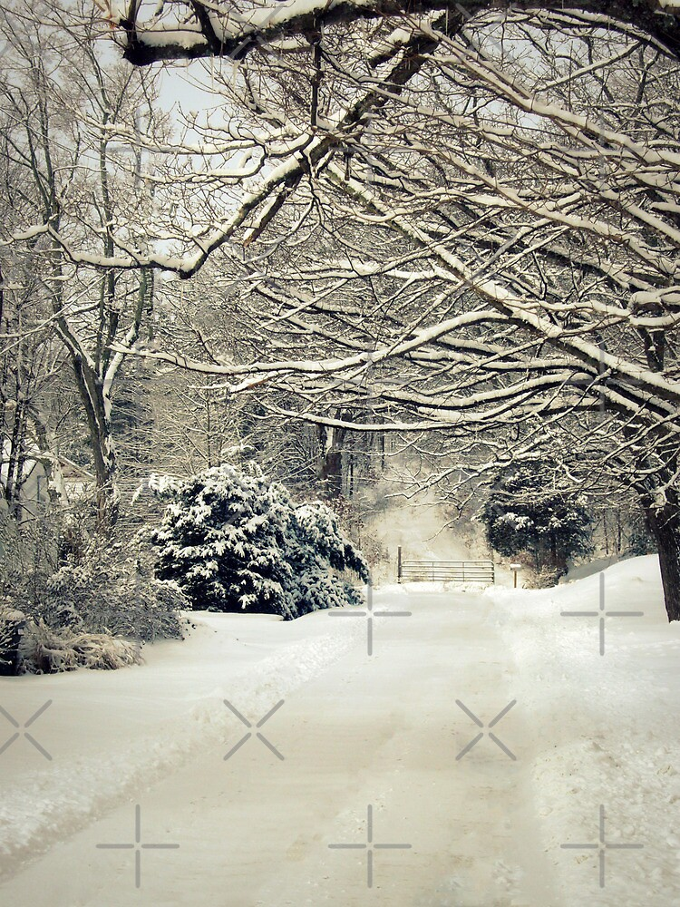 Snow Covered Road by FrankieCat