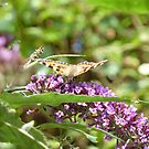 Painted Lady Butterfly by Cat-Artist