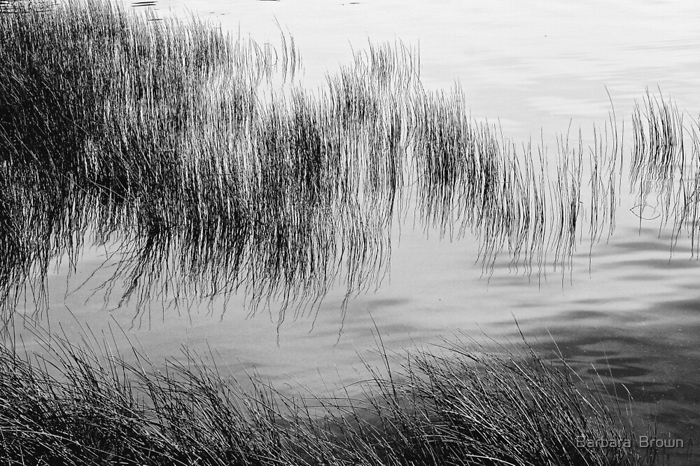Lake Grasses Abstract by Barbara  Brown