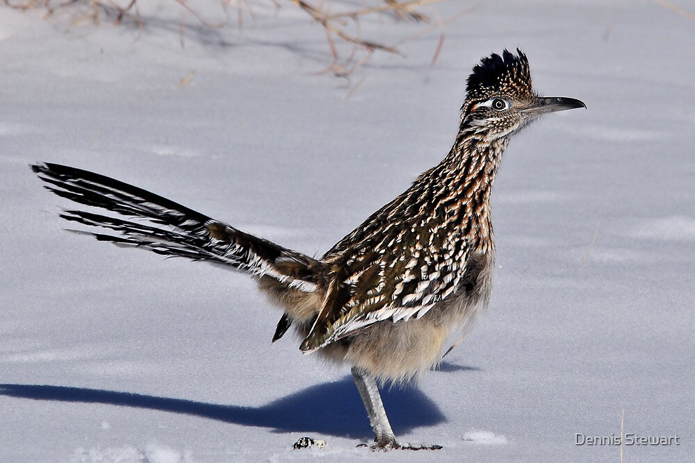 Texas Roadrunner by Dennis Stewart