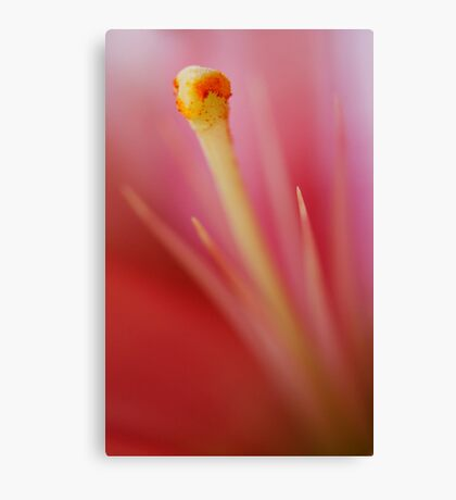 Stamen in Pink  Canvas Print