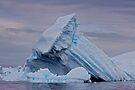 A Niceberg! by Krys Bailey