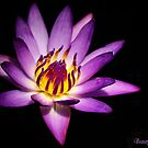 Beauty lies Within by Kym Howard