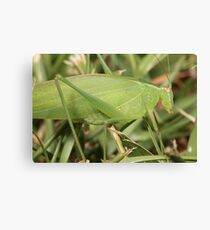 Ah, Grasshopper Canvas Print
