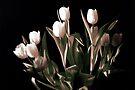 Black Tulip by Dominique MEYNIER