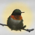 Male Ruby Hummingbird by Dee Belanger